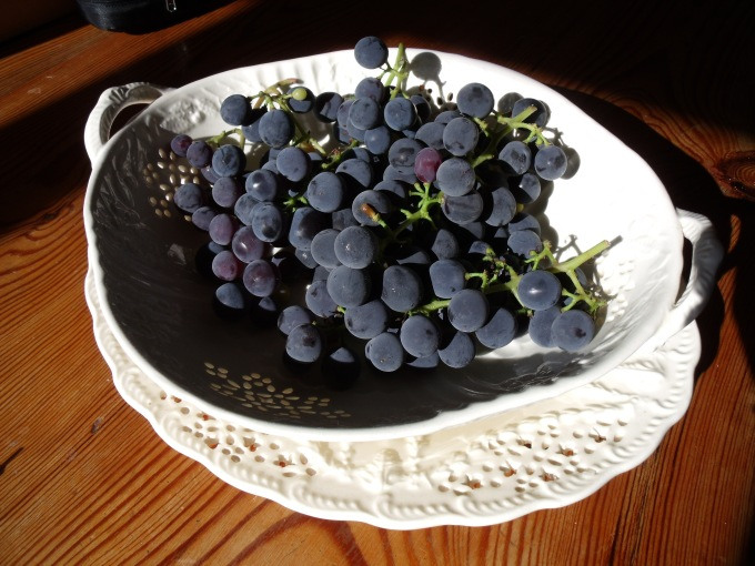 Framboise as table grapes